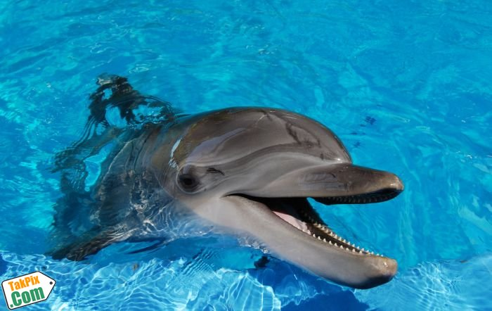 http://images.takpix.com/2012/02/04/dolphins/takpix-dolphins18.jpg